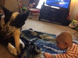 Determined to get puppy brother's bone.